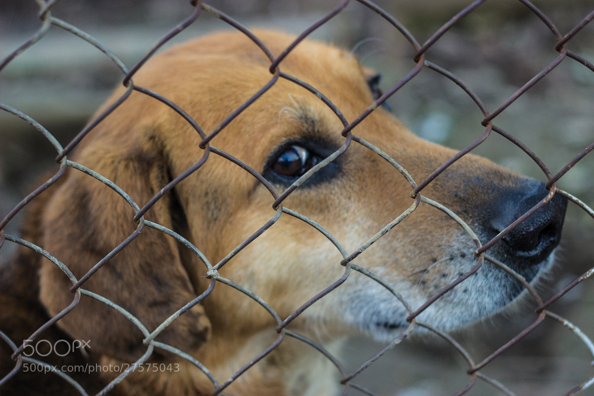 Photograph sad dog by Maxim Sheluhin on 500px