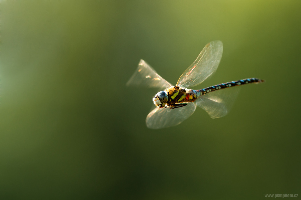Photograph X-Wing by Peter Krejzl on 500px