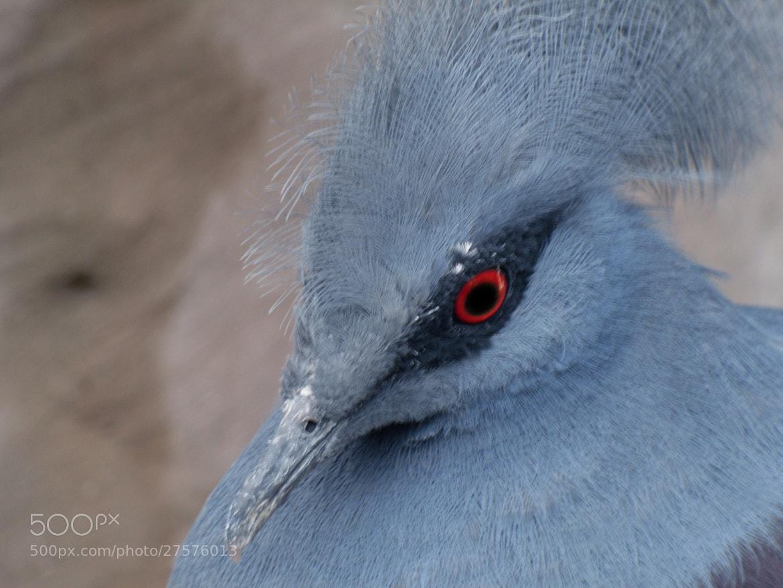Photograph Blue Velvet by ML del S on 500px