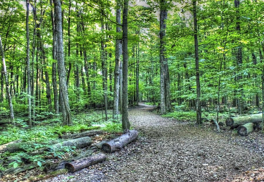 Woodbridge Forest 2