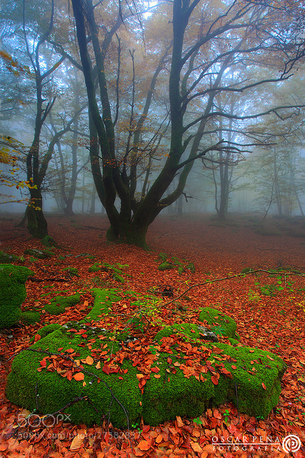 Photograph - Silent forest - by Oscar  Peña on 500px