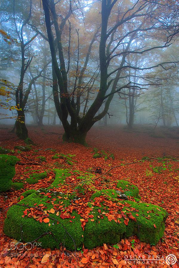 Photograph - Silent forest - by Oscar  Peña on 500px