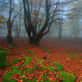 - Silent forest - by Oscar  Peña (oscarpfotografia)) on 500px.com