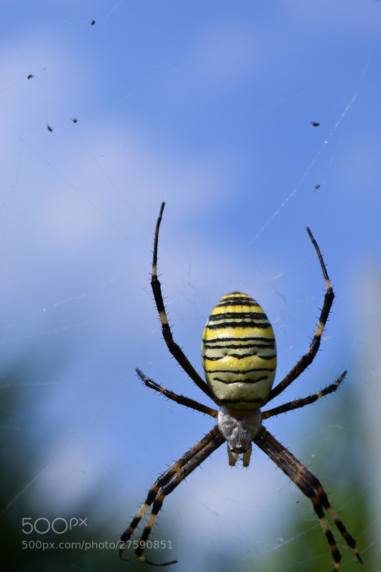 Photograph Spider by Valera Gorban on 500px