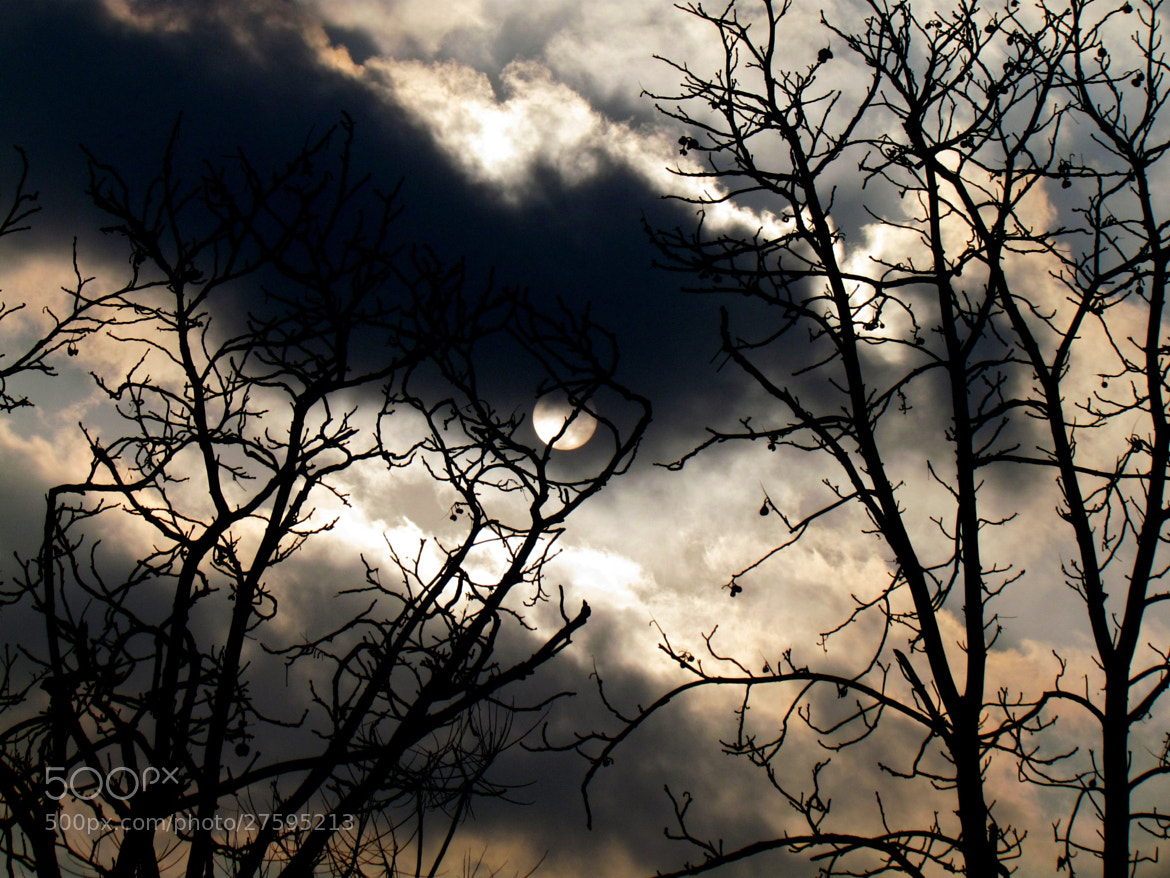 Photograph Fly me to the moon by Laura Treglia on 500px