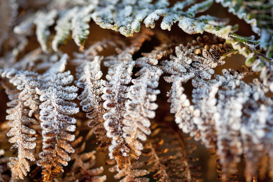 Photograph UK Frost by Ian Schofield on 500px