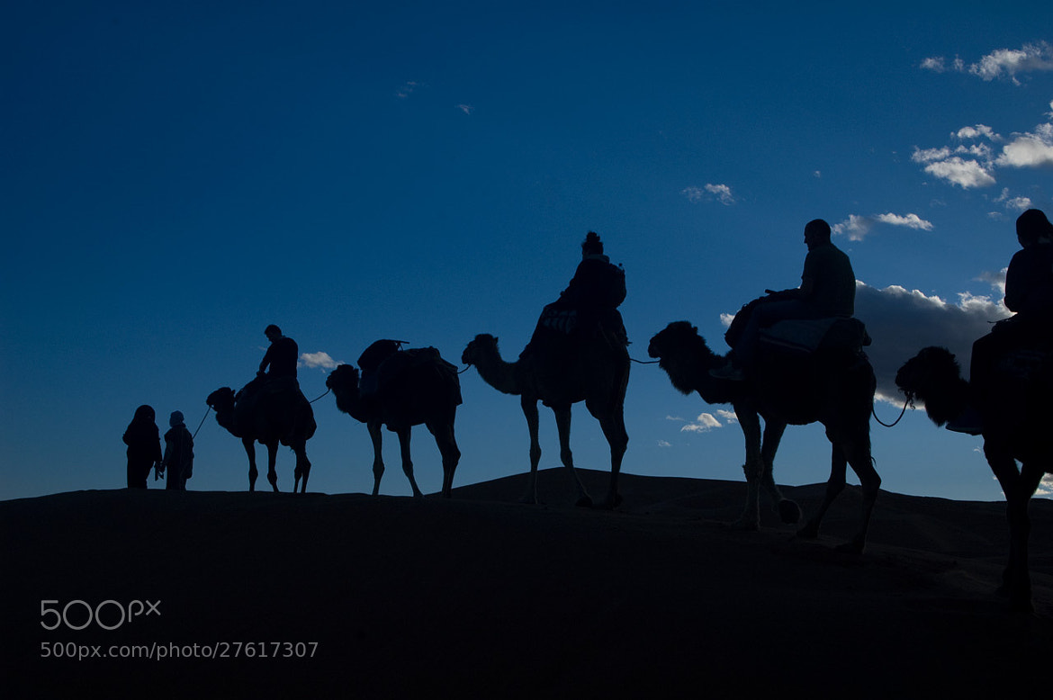 Photograph Camels in Silhouette by Pat Burns on 500px