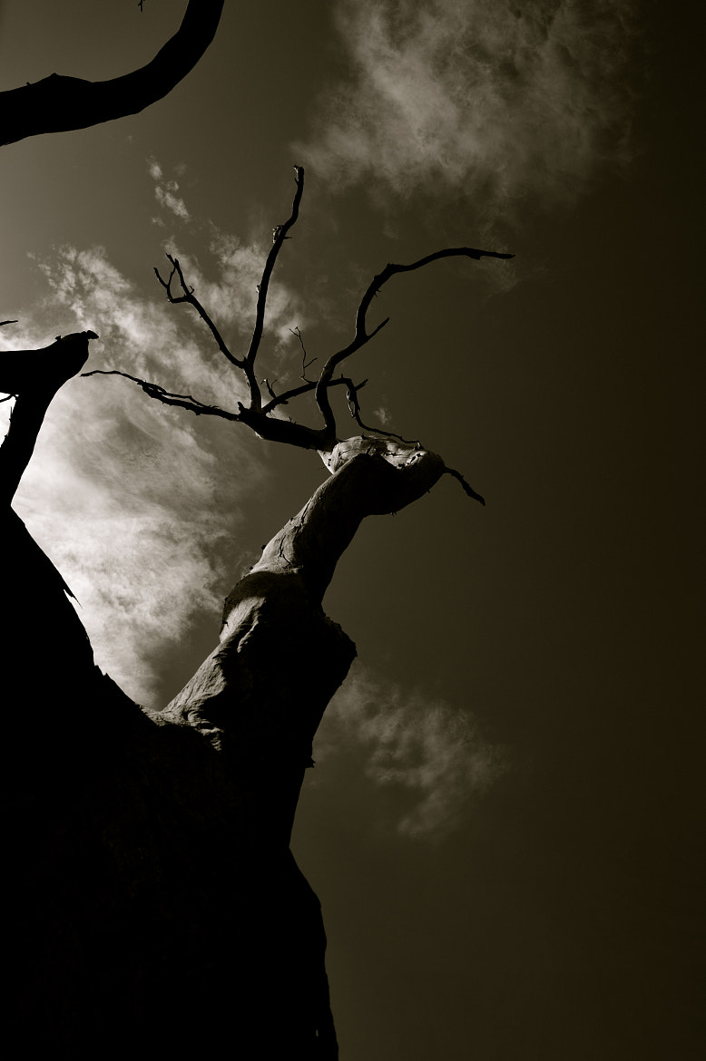 Photograph Branching Out by Sion Jones on 500px