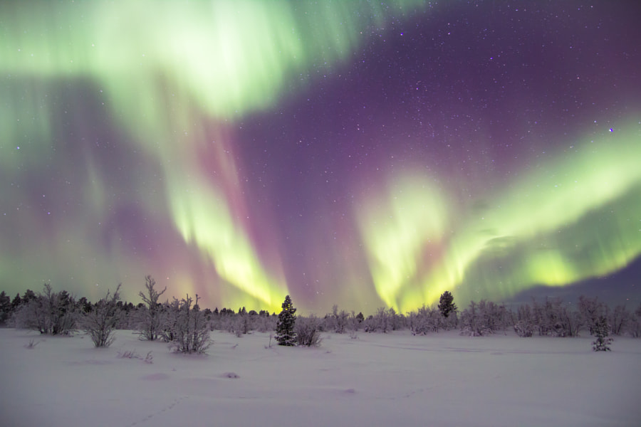 Aurora borealis in Krokvik outside of Kiruna in January 2012 by Björn Holmbom on 500px.com