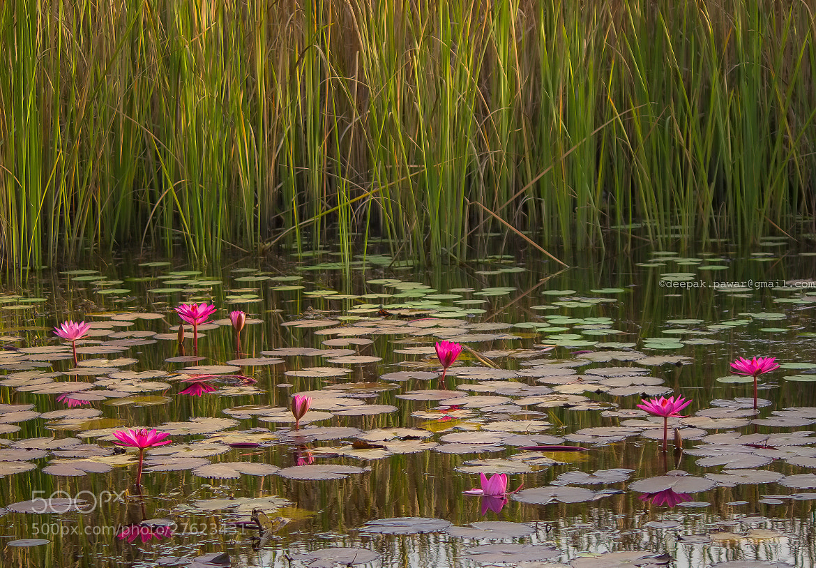 Photograph Pond of life by Deepak Pawar on 500px