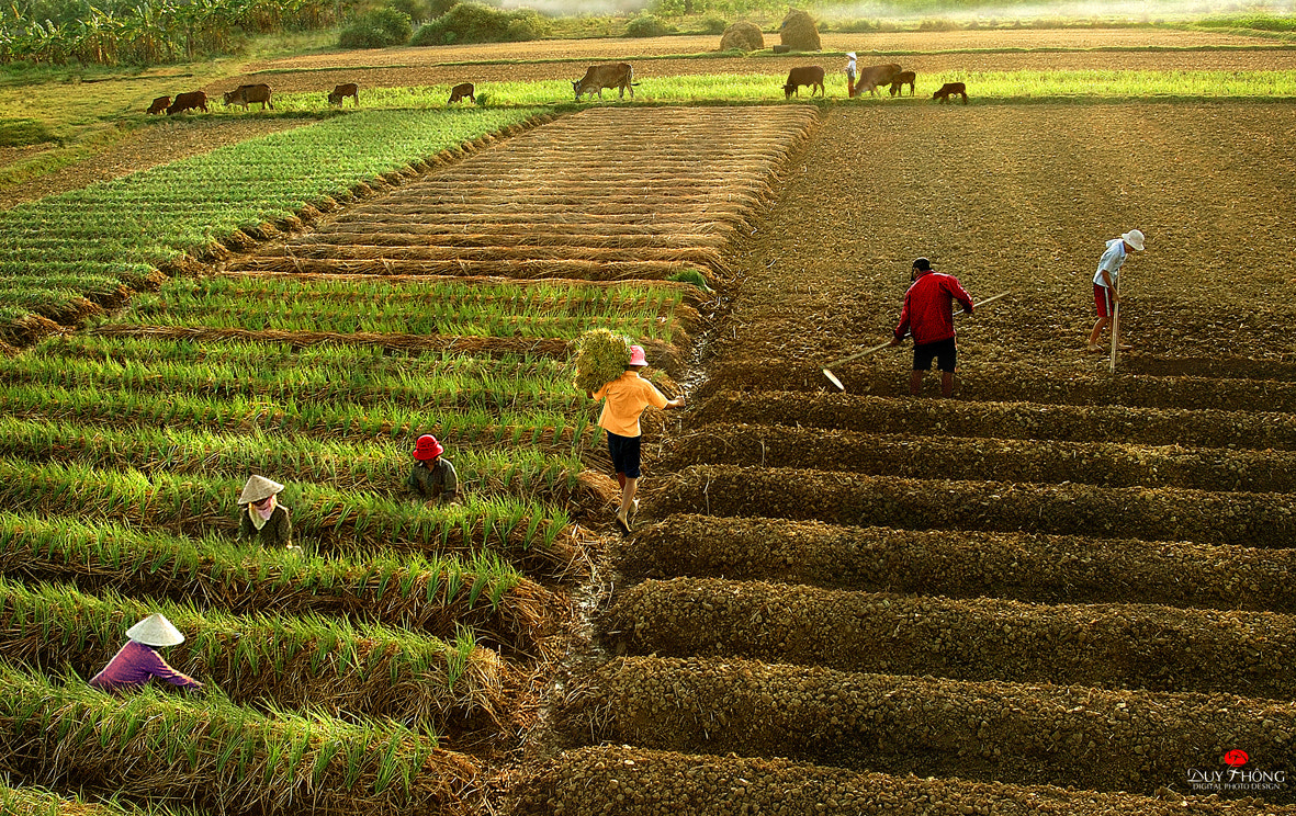Photograph HARVEST  by Duy Thong Vu on 500px
