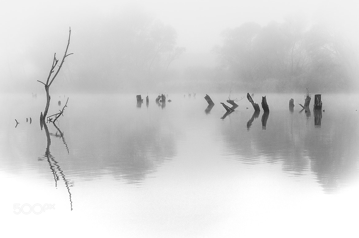 Photograph Foggy morning by Andy 58 on 500px