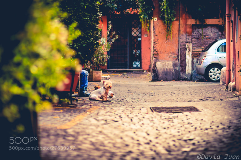Photograph The dog waiting by David Juan on 500px