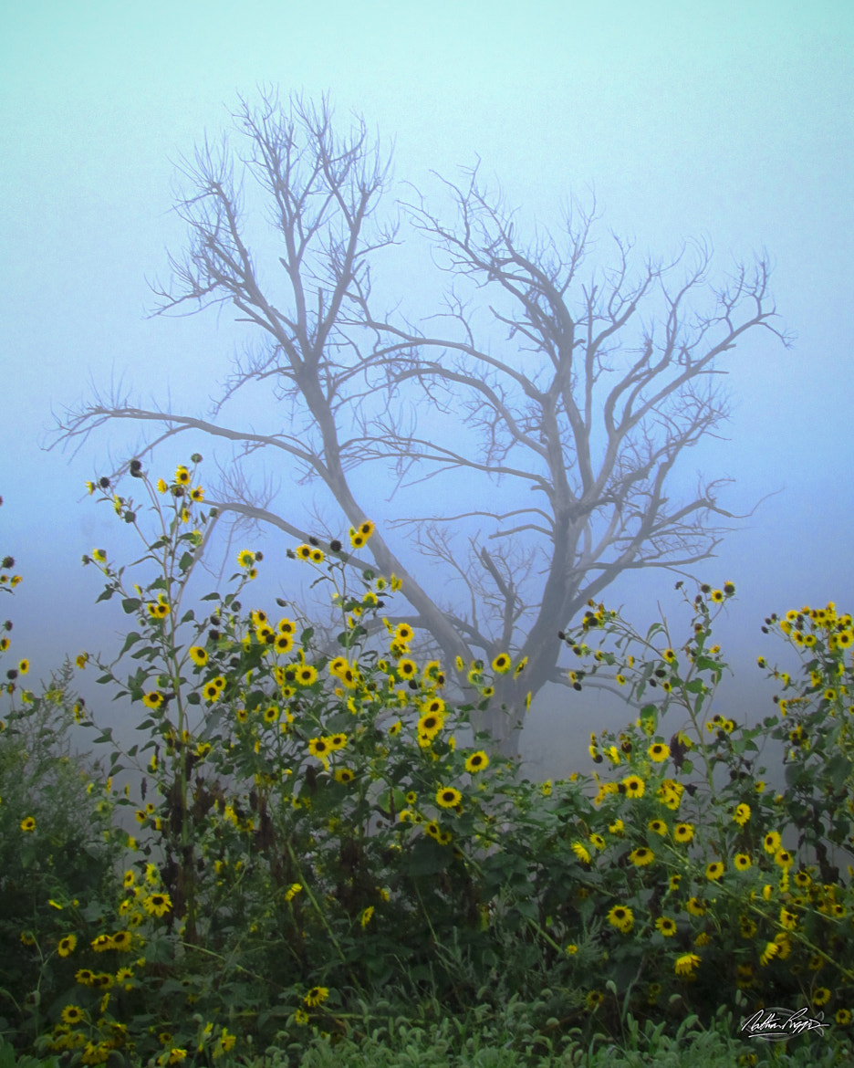Photograph Foggy Morning by Nate Riggins on 500px