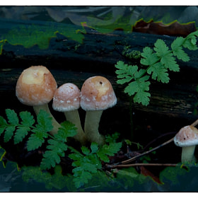 Mushrooms by Cor Pijpers (cece2)) on 500px.com