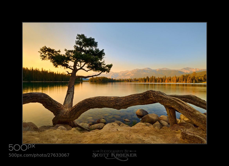 Photograph Tarantula Tree by Scott Kroeker on 500px