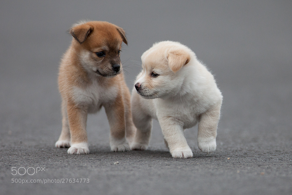 Photograph litter of puppies by JinHyouk Jang on 500px