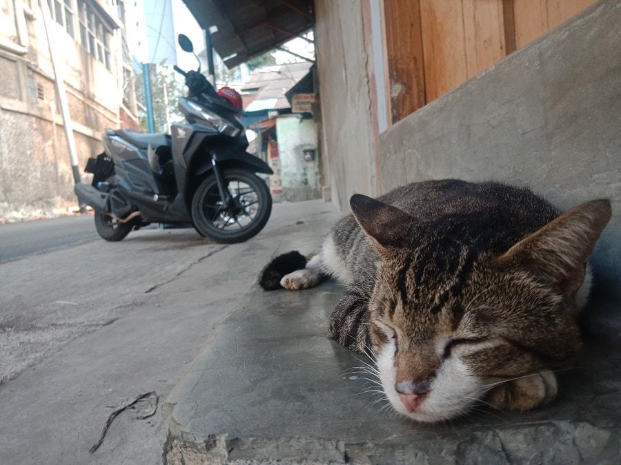 Cat and bike, автор — Bangkit Ardiansyah на 500px.com