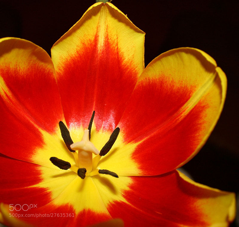 Photograph Untitled by Amateur Pic on 500px