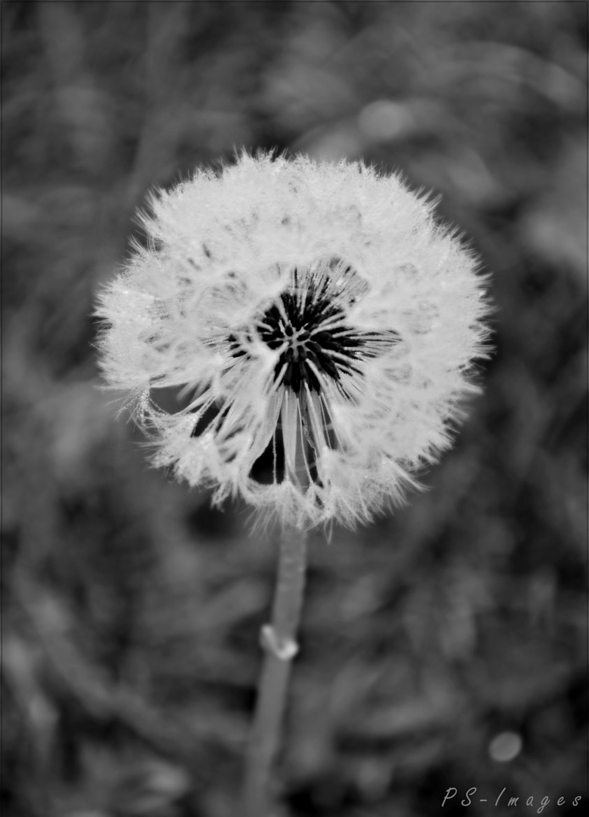 Photograph black and white by prince sharma on 500px