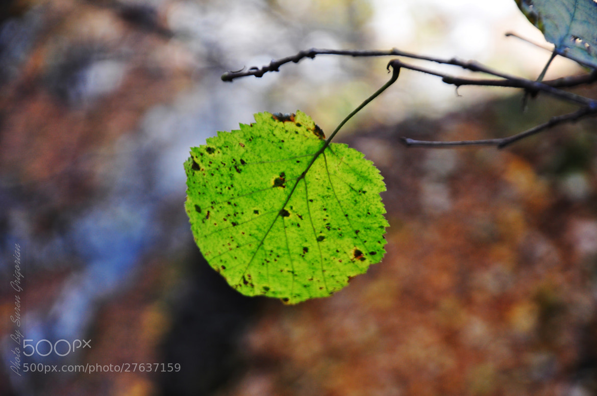 Photograph Green! by No Smoking on 500px