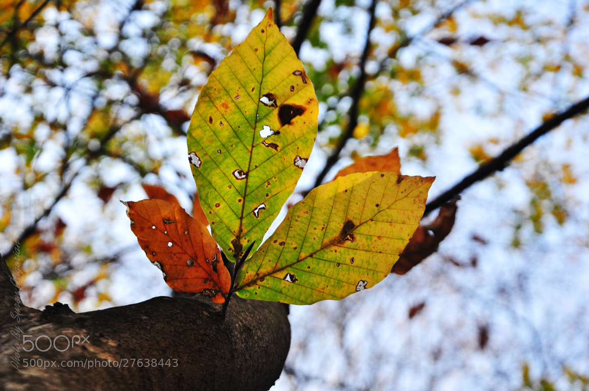 Photograph 3Leaves by No Smoking on 500px