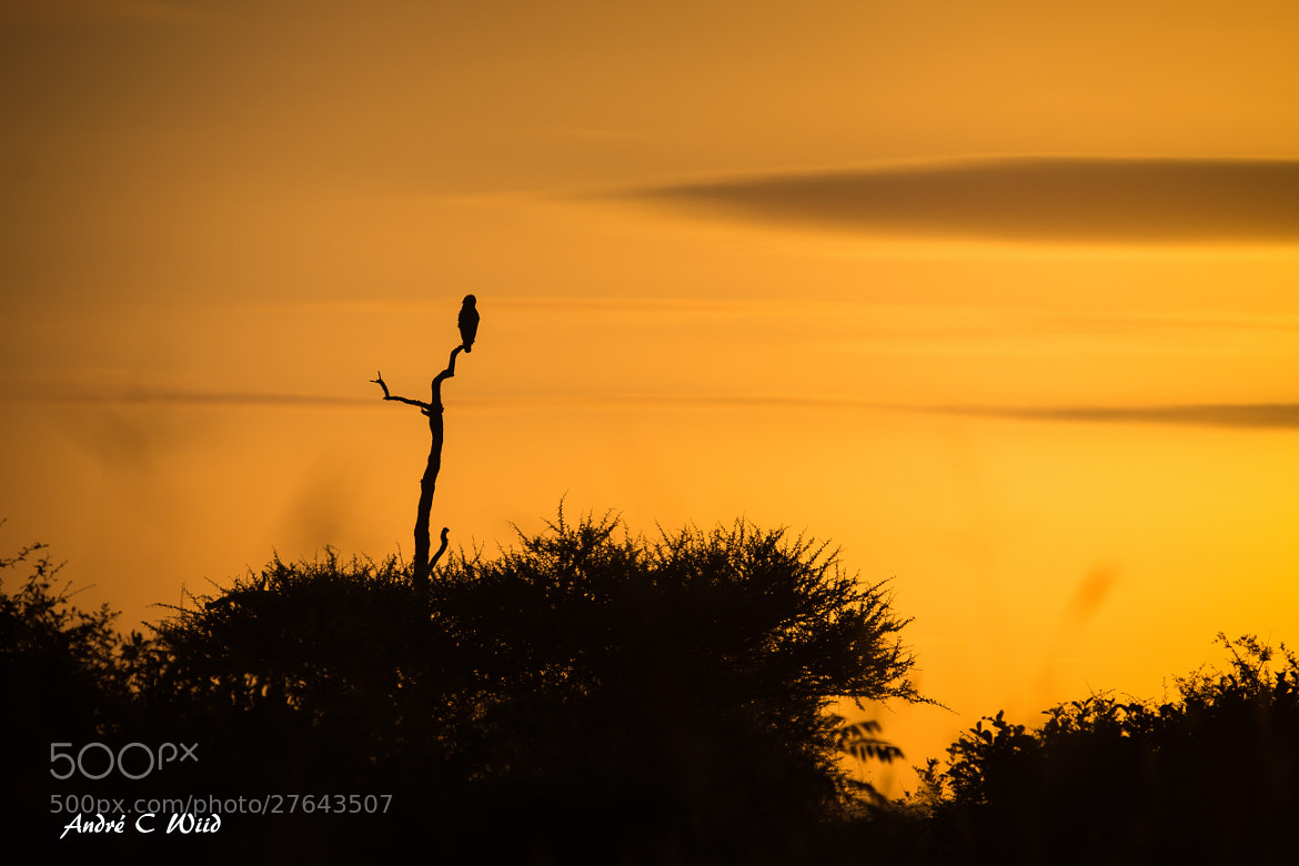 Photograph Sunset watch by Andre Wiid on 500px