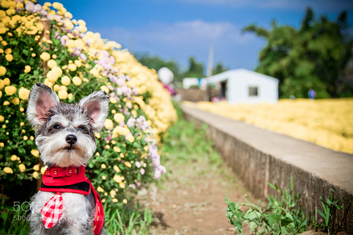 Photograph My lovely puppy by 憲龍 周 on 500px