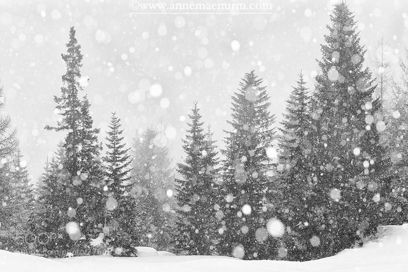 Photograph Let it Snow II by Anne Mäenurm on 500px