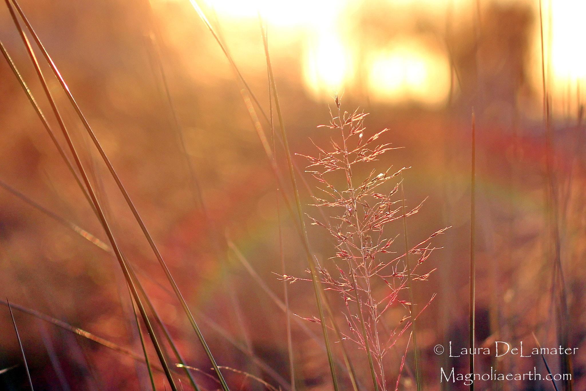 Photograph Golden Rainbow by Laura DeLamater on 500px