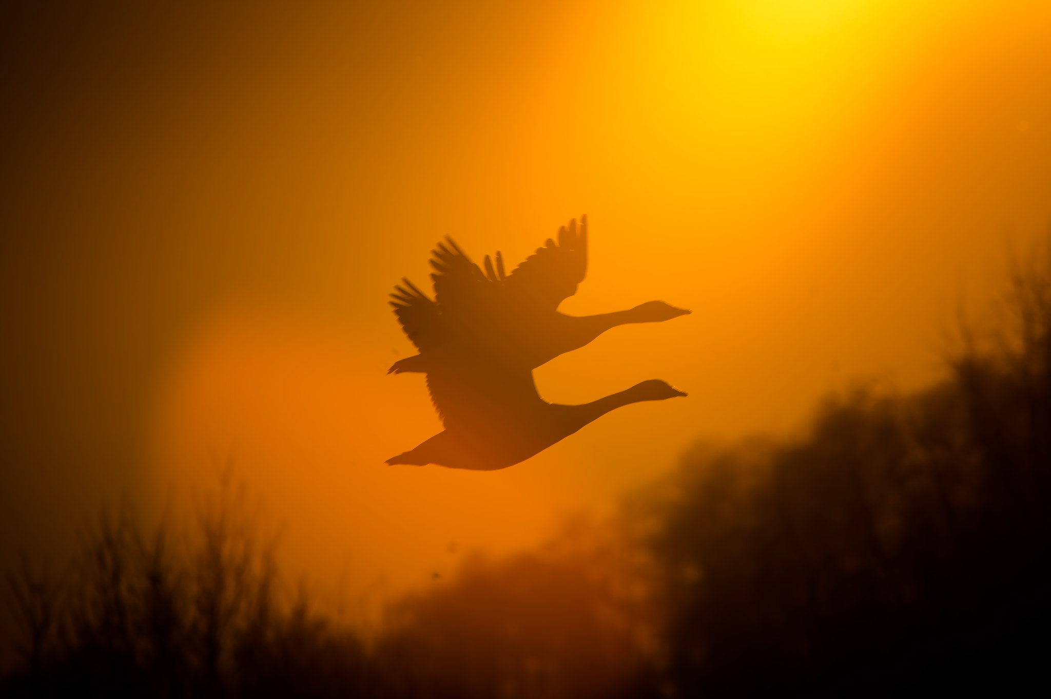 Photograph Flight  and Sundown by Ralf Bessoth on 500px