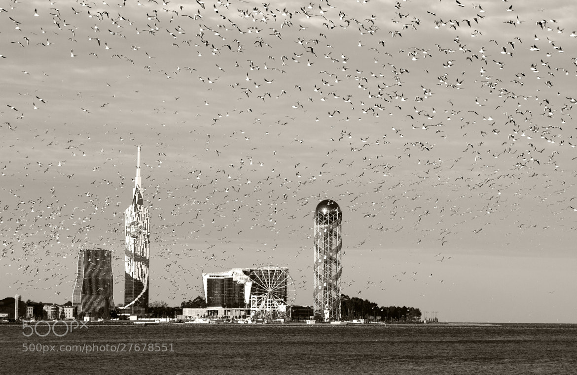 Photograph Batumi and Birds by Ahmet Yeşil on 500px