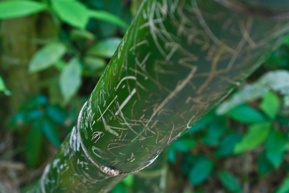 Photograph Bamboo... by Amit Jagdale on 500px