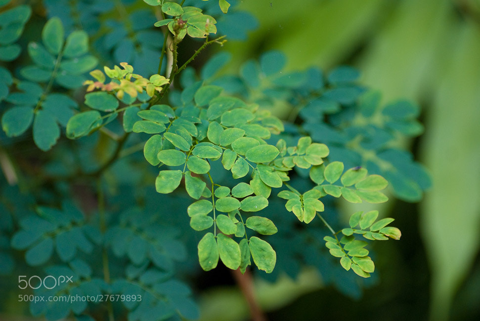 Photograph Shades of Green by Amit Jagdale on 500px