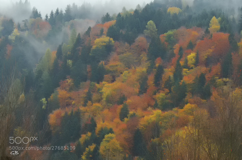 Photograph Tutti i colori del bosco by lapococa on 500px