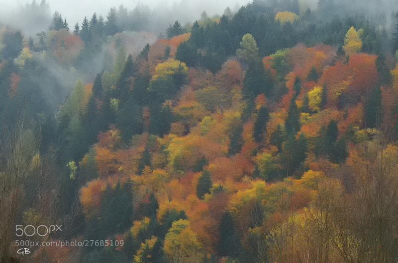 Photograph Tutti i colori del bosco by lapococa on 500px