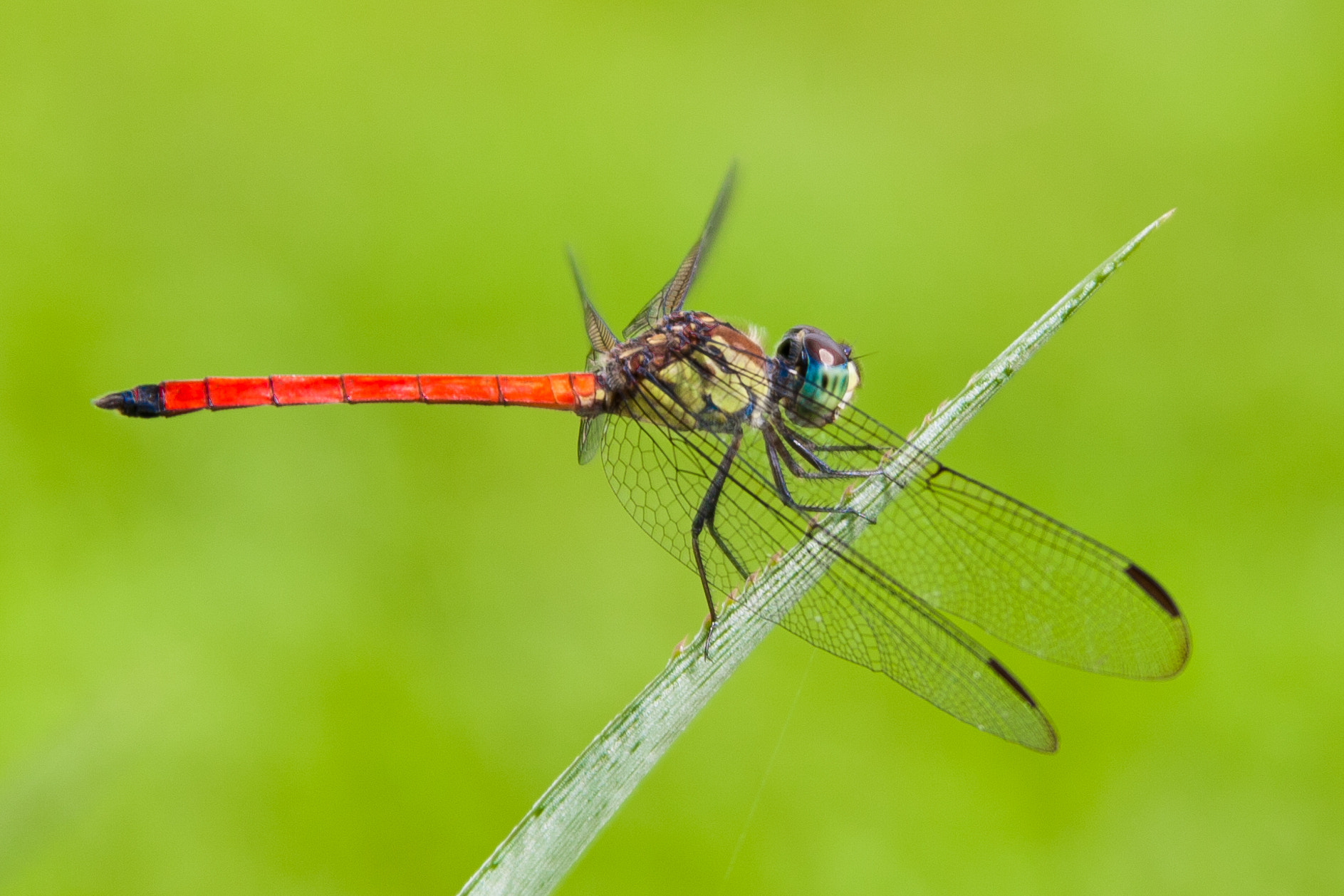 Photograph Dragonfly by Rebecca Jane on 500px