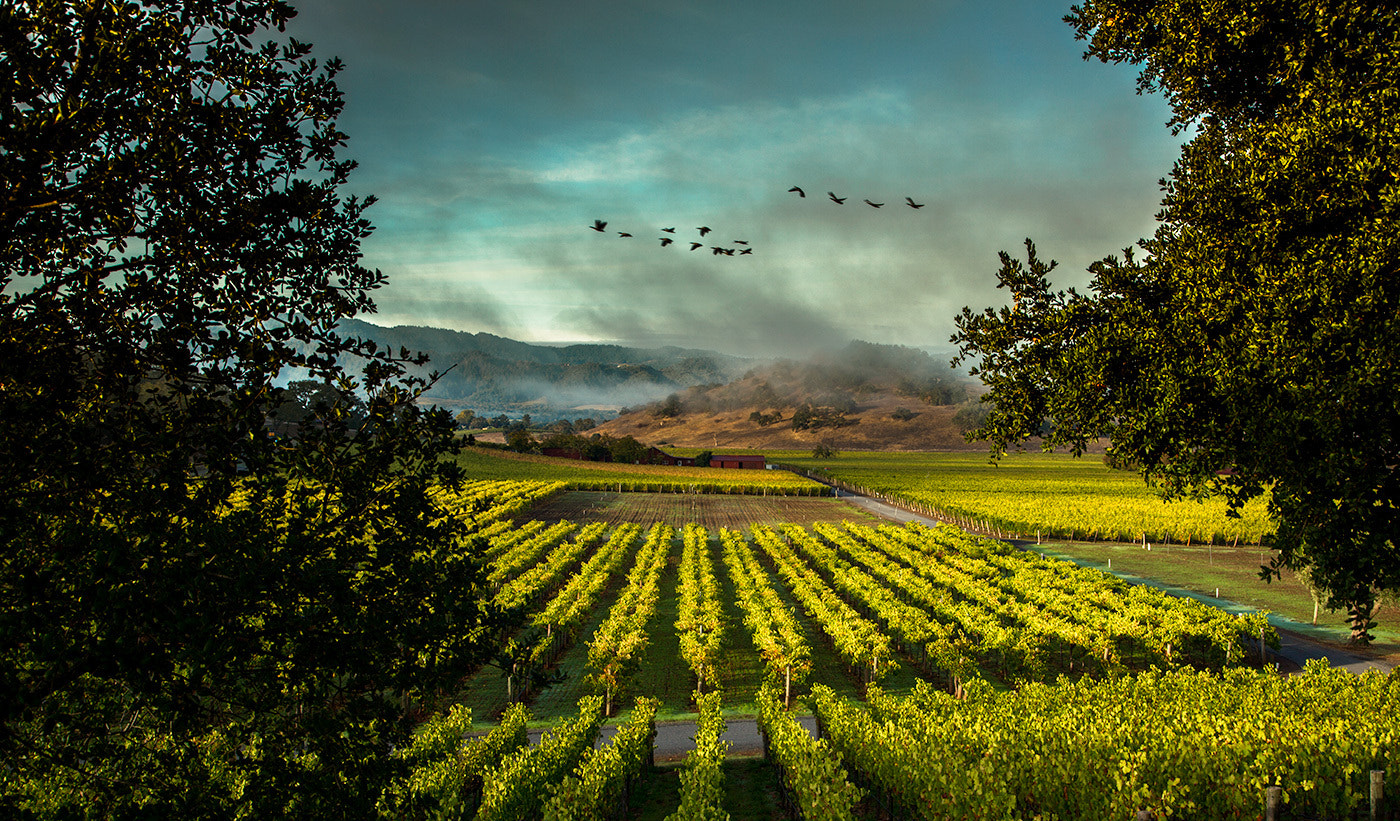 Photograph Napa Valley from Silverado Trail by Rocco Ceselin on 500px