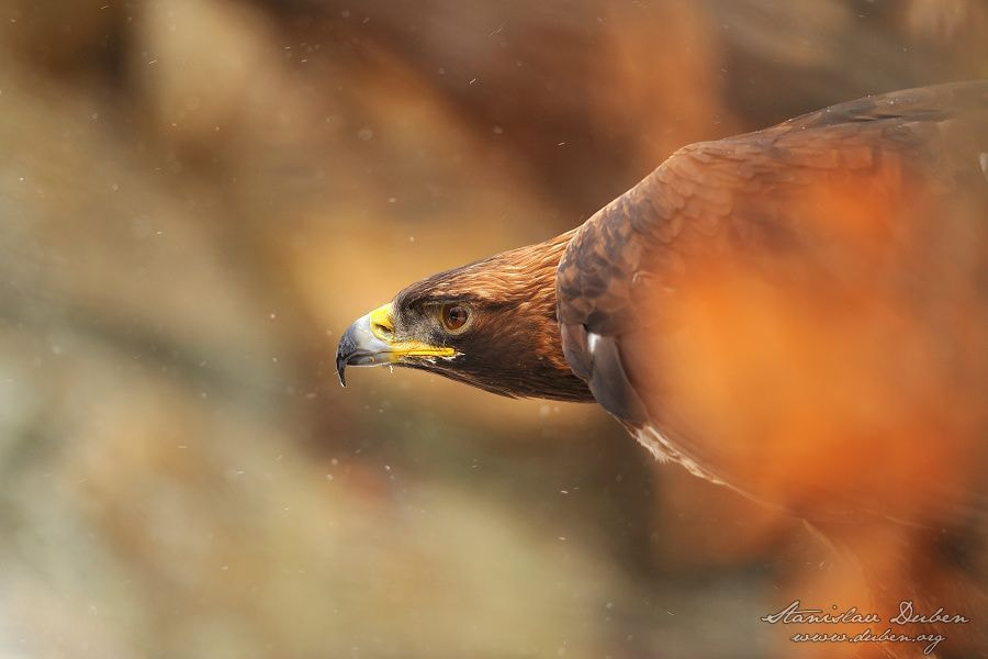 Photograph I am watching you by Stanislav Duben on 500px