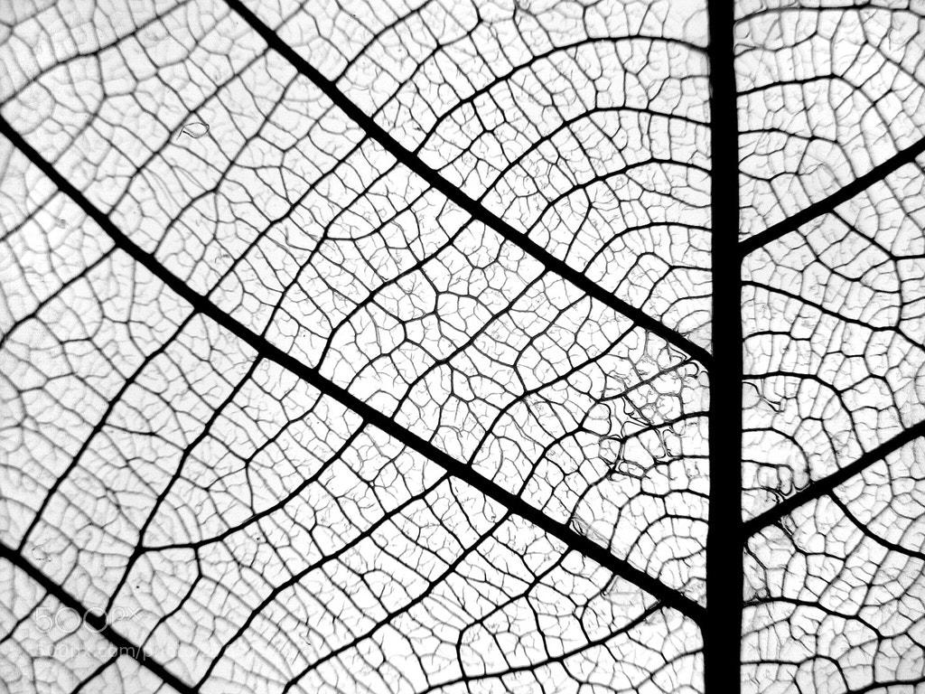 Photograph leaf veins by Mister Mark  on 500px