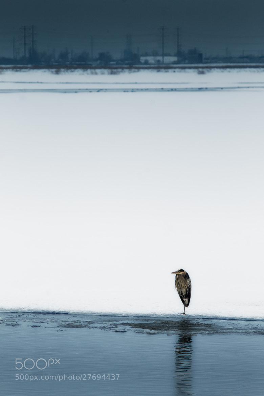 Photograph Watcher by Glenn Perryman on 500px
