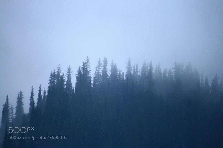 Photograph Pines by Masha Savchenko on 500px
