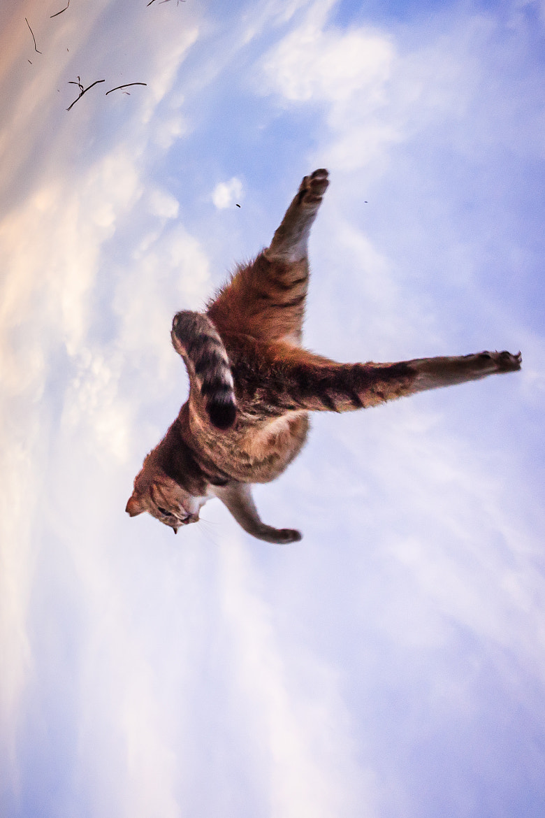 Photograph Top Gun Cat by Seiji Mamiya on 500px