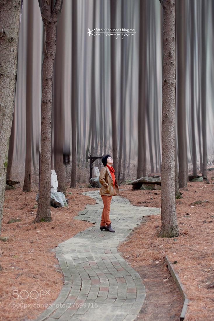 Photograph Forest by kim seong-geun on 500px