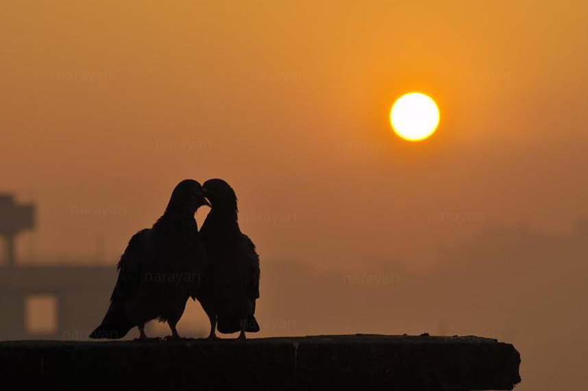 Photograph LOVE is in the AIR by Narayan Maharjan on 500px