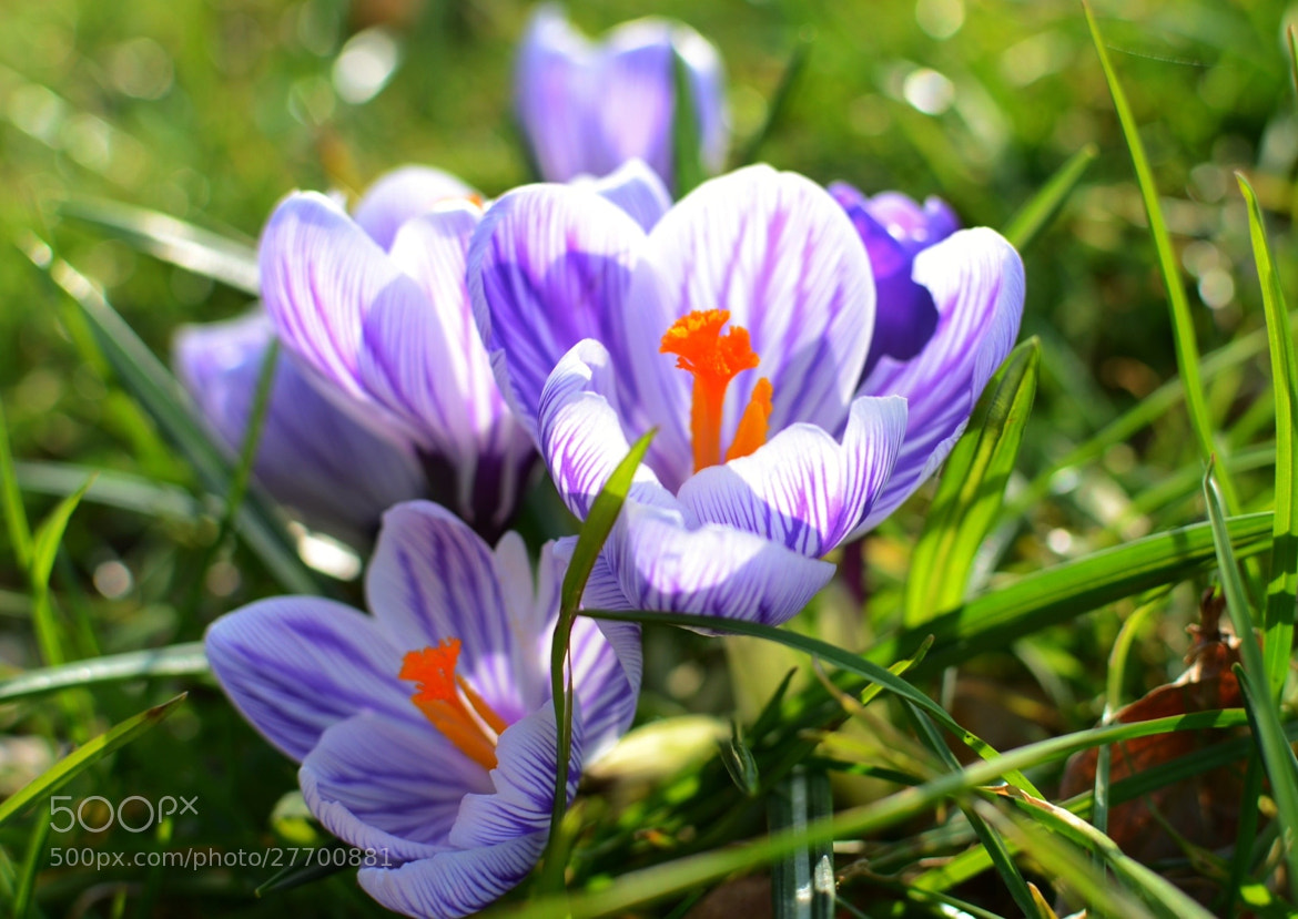 Photograph Spring bouquet  by Sarah  johnson on 500px