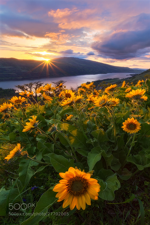 Photograph A Touch of Light by David Thompson on 500px