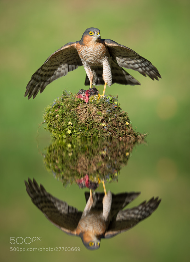 Photograph Sparrowhawk Island by Colin Carter on 500px