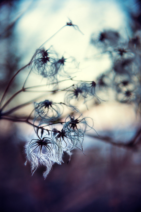Photograph Wintry Whisper by Jared Lim on 500px