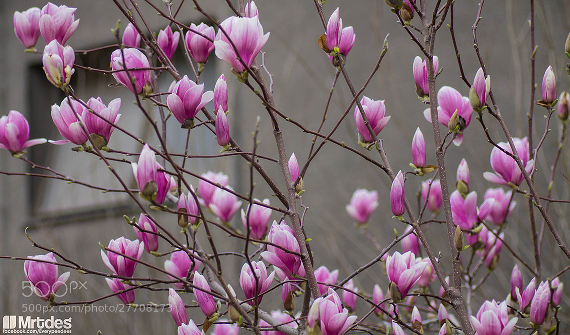 Photograph A touch of spring. by Everypeedees Mu on 500px
